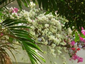 These flowers were everywhere in the compound!