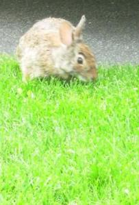 Wonder if I can replace the lawn mower with a bunny!