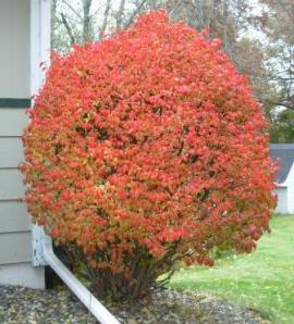 "Our Burning Bush - just started to ""Burn"""