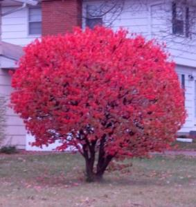 This tree reminds me of the burning bush and Moses talking with God!